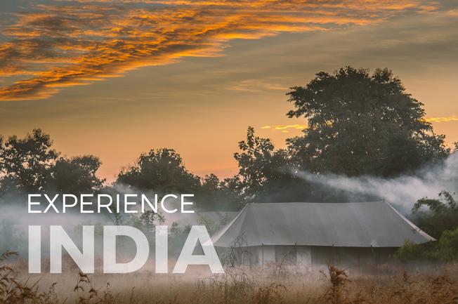 India Jungles and Jewels Adventure