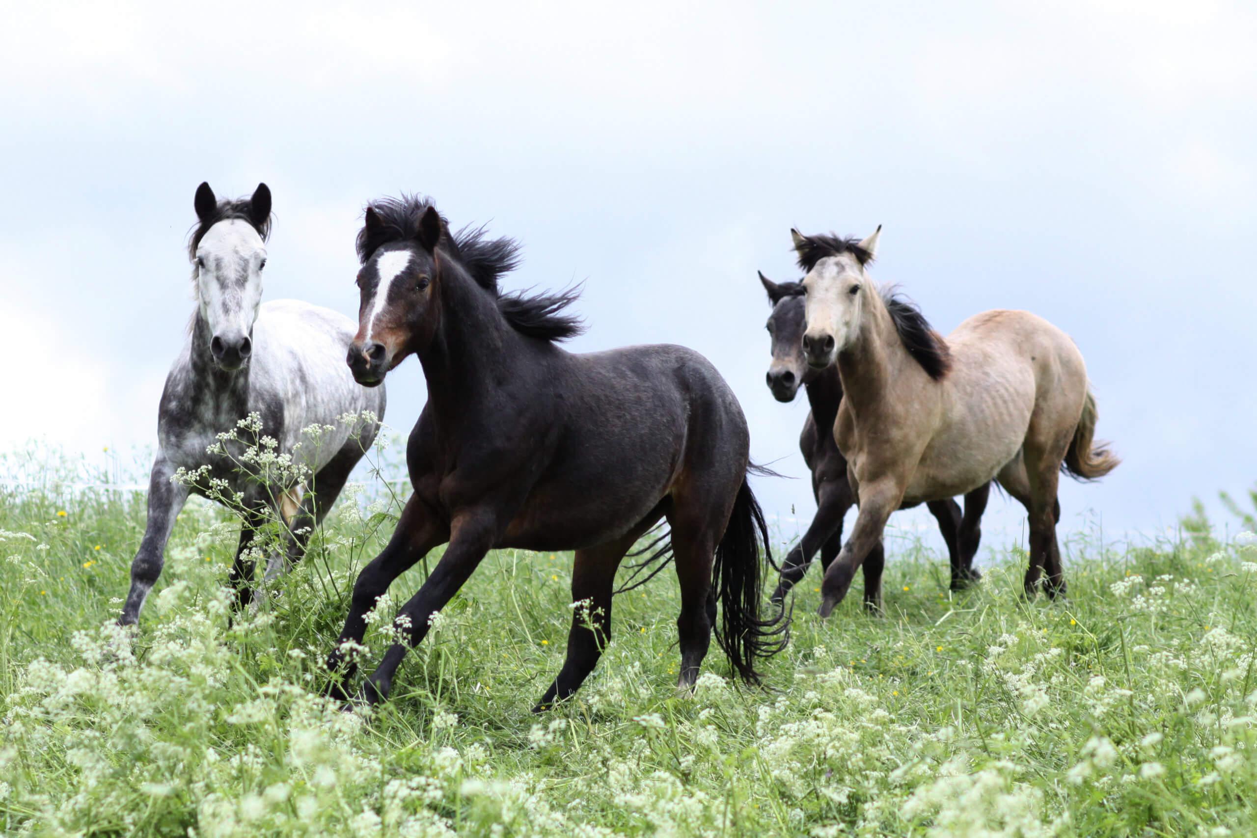 Horseback Riding Adventures, Wild Women Expeditions