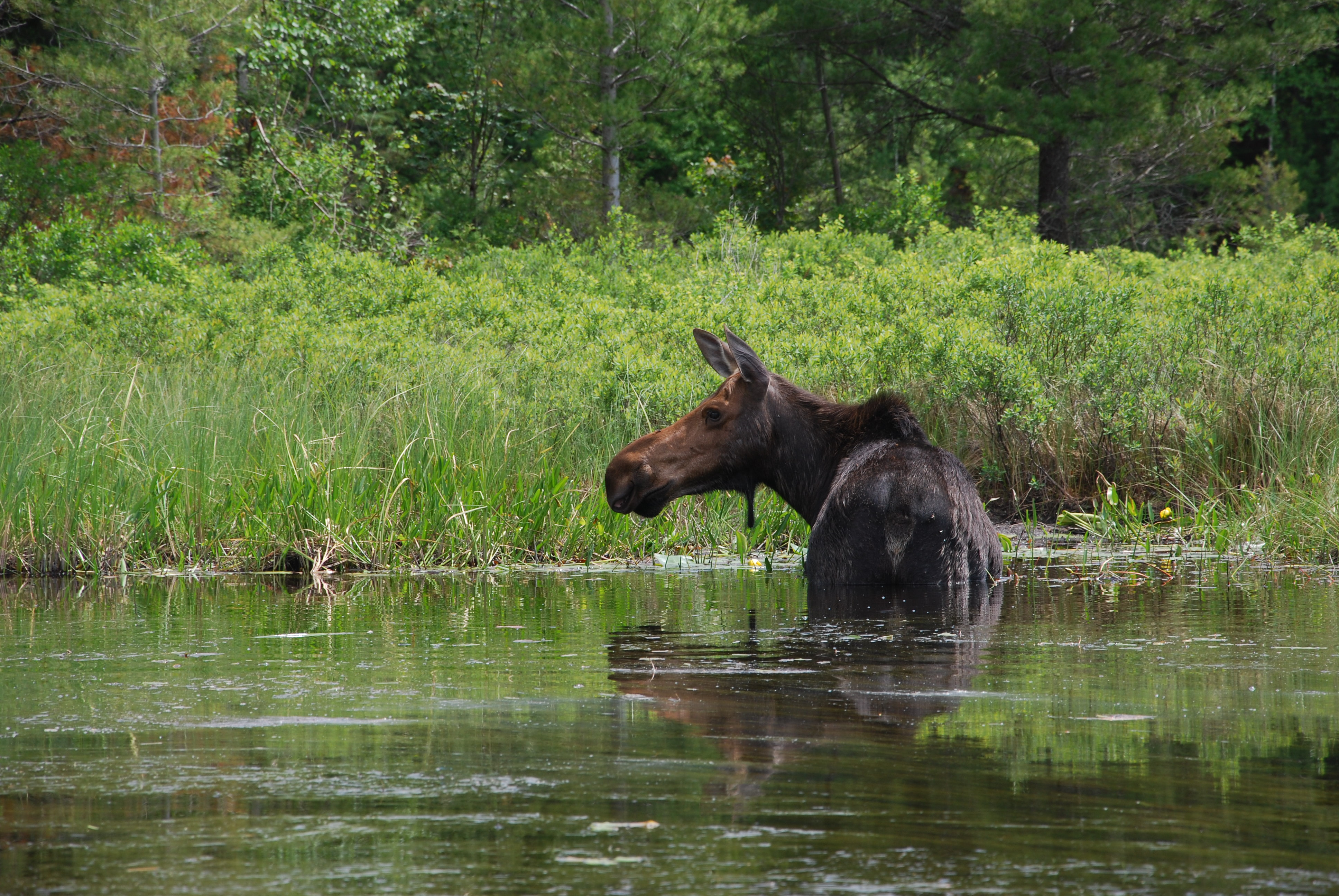 trip overview and navigation through algonquin park Located 15 minutes to algonquin park west gate on hwy 60 makes us at   suggestions, and advice on making your visit a memorable one.